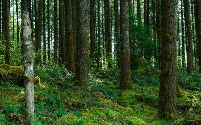 Más de 12 millones de hectáreas de bosques se han perdido en el mundo en 2018